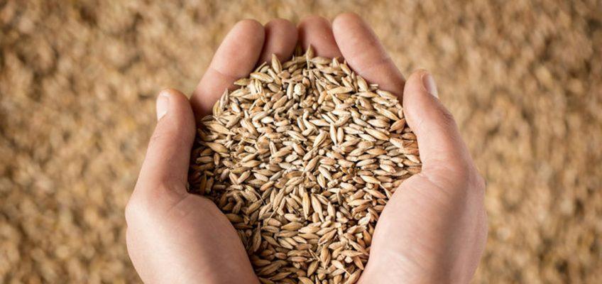 Why grain-free