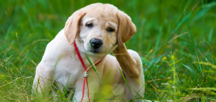 How to Keep Your Dog's Skin and Coat Healthy