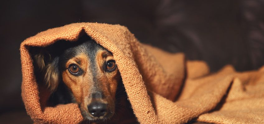 Helping your Dog Cope with Fireworks