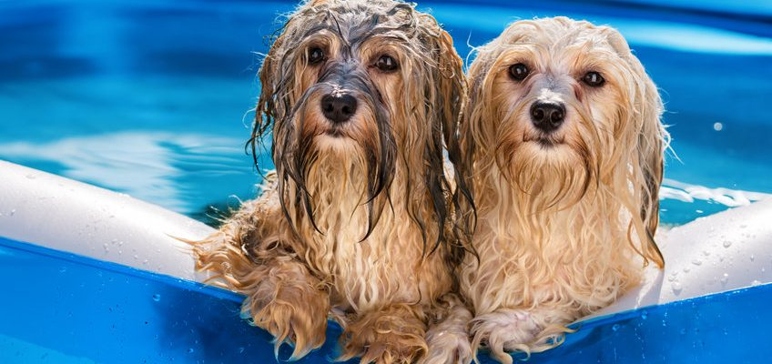 Dog Hot Weather Safety Tips