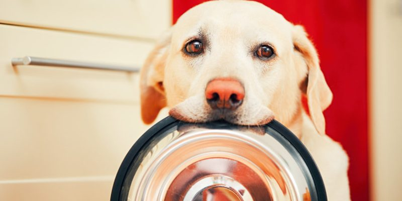 Why is Gut Health so Important for Dogs